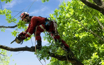 find trusted rated Northern Ireland tree surgeons