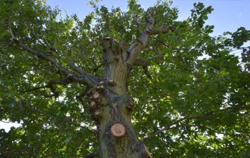 what is Northern Ireland tree surgery?